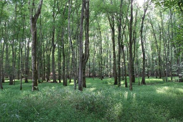 Ridge grassy area