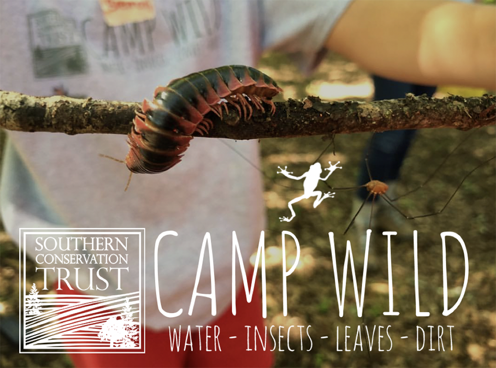 Camp Wild Summer Camps