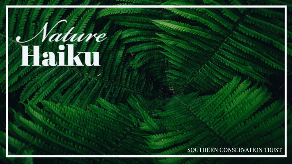 Nature Haiku - Southern Conservation Trust